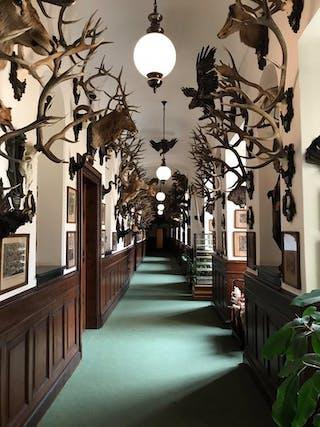 Trofeeën: In kasteel Konopišt hangen de vele jachttrofeeën van Franz Ferdinand.